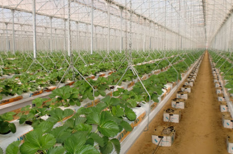 Hydroponic Organic Vegetables