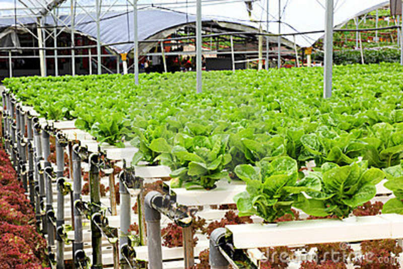 Agriculture-Hydroponic-Vegetable-Farm