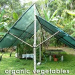 Blue Mountain Organics - Hydroponic Vegitables
